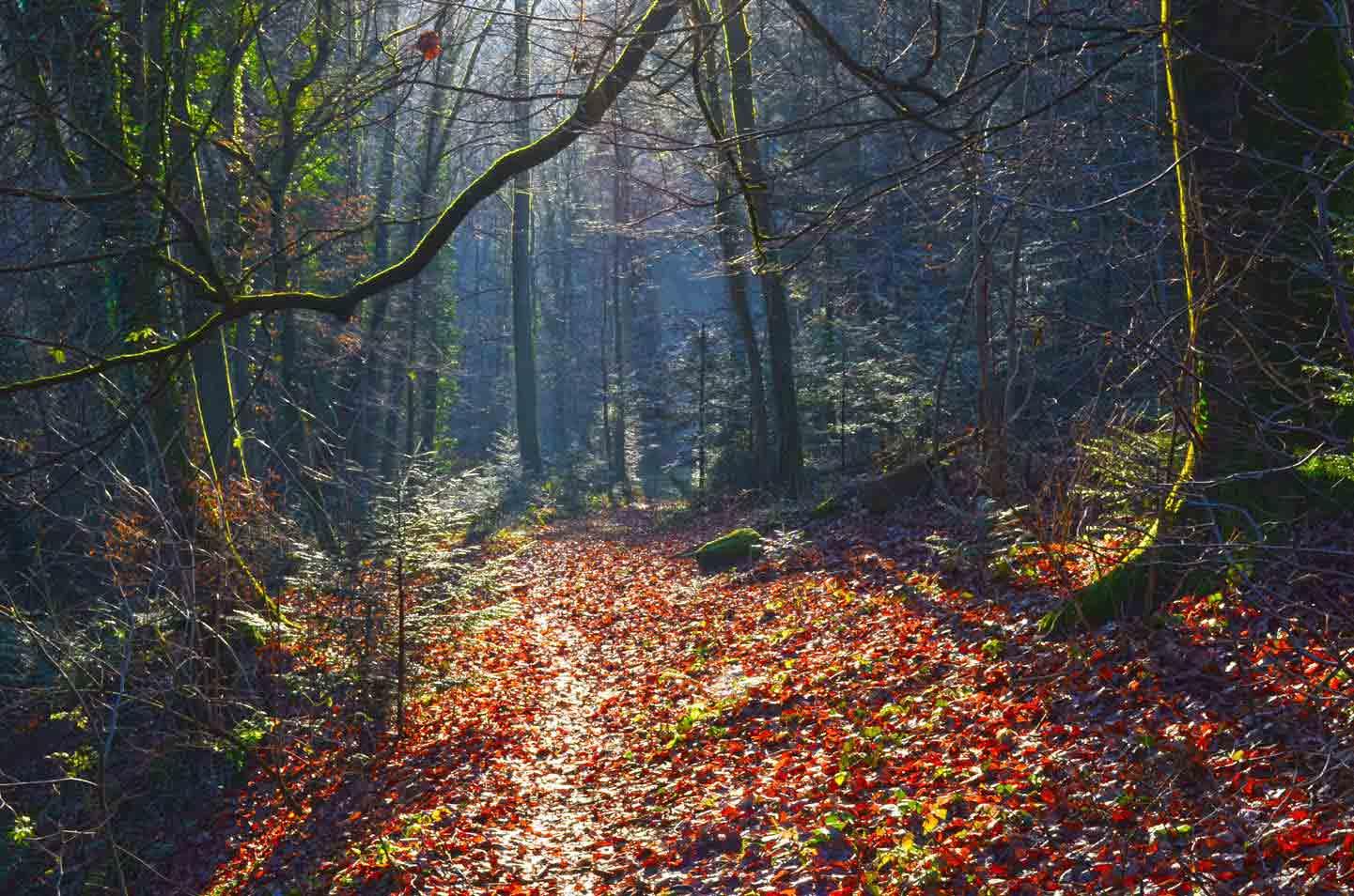 gite nature en Alsace Moselle Vosges du Nord